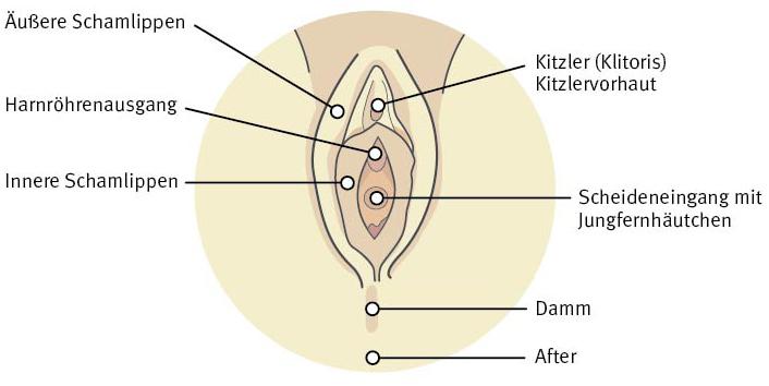 Weiblichen Zeichnung Kitzlers des Einen weiblichen